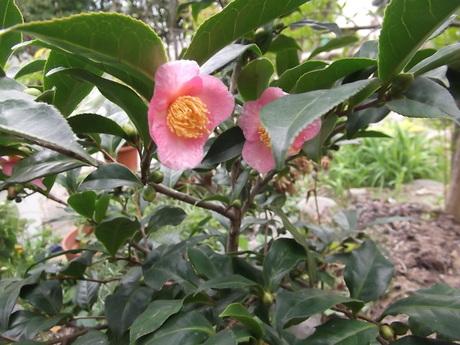 花と芽と実と_a0203003_15441647.jpg