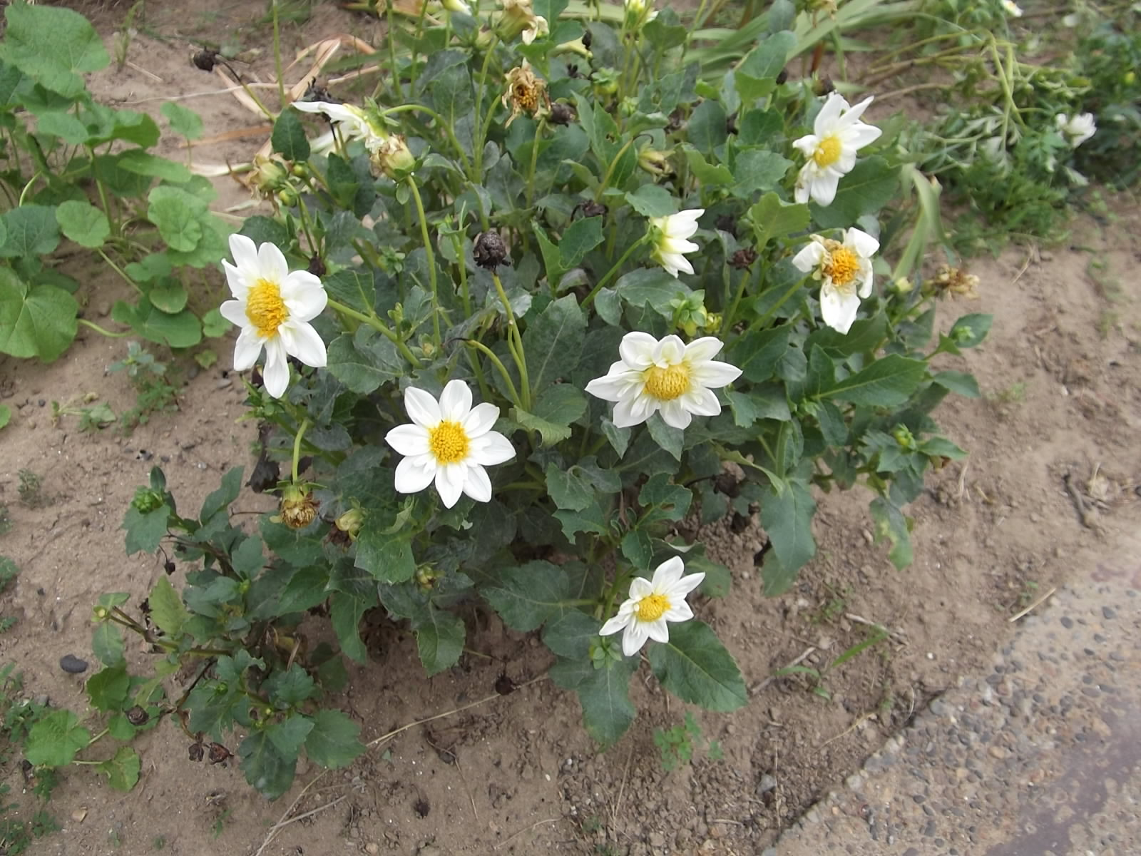 花と芽と実と_a0203003_15444551.jpg