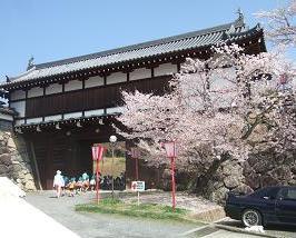 桜名所めぐり 大和郡山城址_d0227610_6462378.jpg