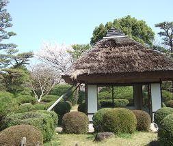 桜名所めぐり 大和郡山城址_d0227610_6502292.jpg