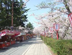 桜名所めぐり 大和郡山城址_d0227610_655071.jpg