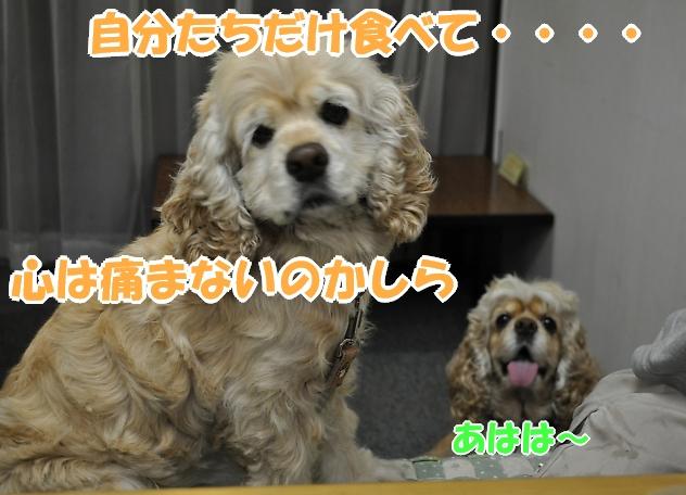 b0067012_21585043.jpg