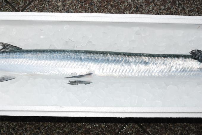 オキザヨリ/沖細魚:沖針魚 ............. ダツの仲間っす!_d0069838_12452099.jpg