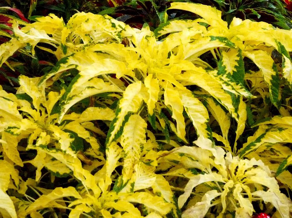和歌山県植物公園緑花センター _b0093754_22524653.jpg