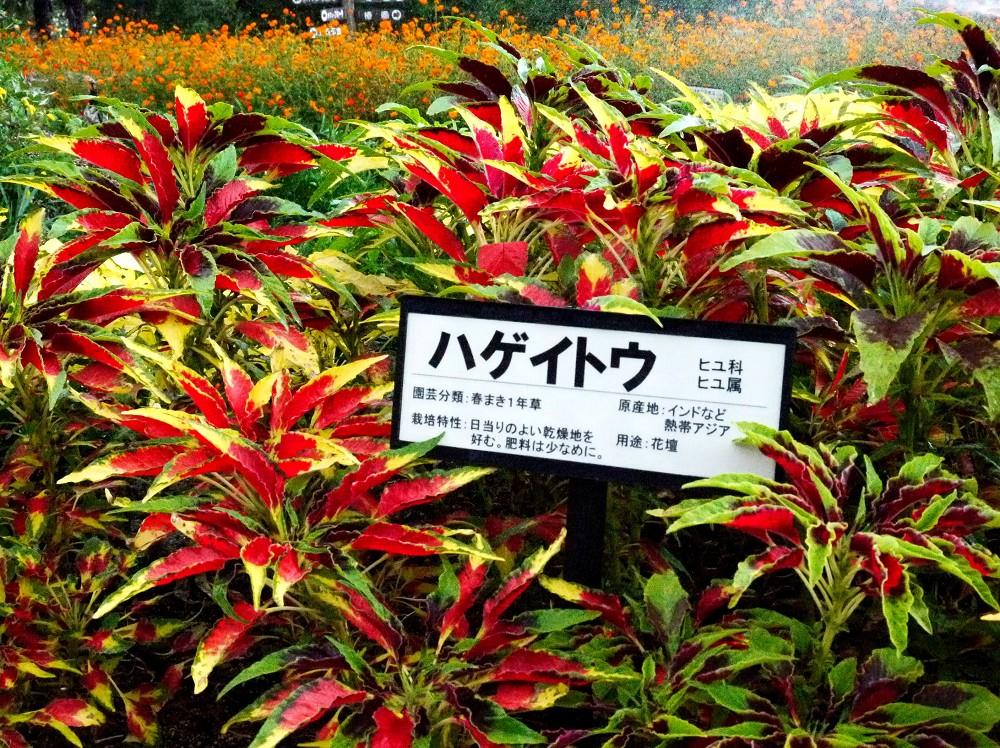 和歌山県植物公園緑花センター _b0093754_2255619.jpg