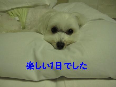 b0193480_1610383.jpg