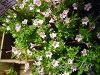 季節が代わり夏から秋へ…お花も衣替え…_d0266681_1001378.jpg