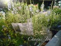 季節が代わり夏から秋へ…お花も衣替え…_d0266681_1003724.jpg