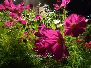 季節が代わり夏から秋へ…お花も衣替え…_d0266681_1004892.jpg