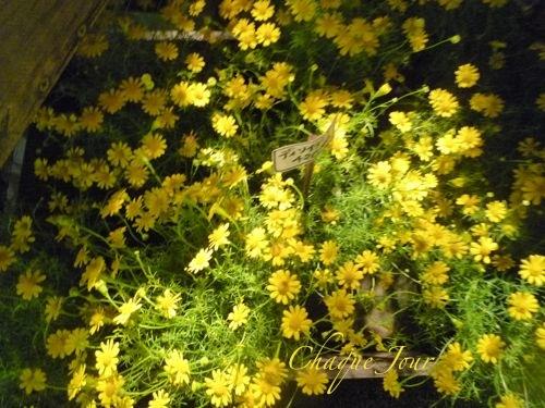 季節が代わり夏から秋へ…お花も衣替え…_d0266681_10114100.jpg