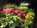 季節が代わり夏から秋へ…お花も衣替え…_d0266681_9591127.jpg