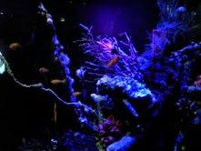 私と奈良と金魚と_f0230689_1652594.jpg