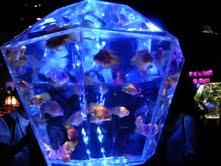 私と奈良と金魚と_f0230689_16544048.jpg