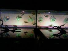 私と奈良と金魚と_f0230689_1712135.jpg