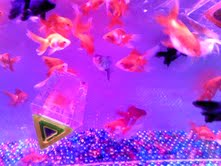 私と奈良と金魚と_f0230689_1713277.jpg
