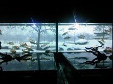 私と奈良と金魚と_f0230689_17133825.jpg