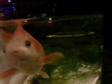 私と奈良と金魚と_f0230689_1741188.jpg