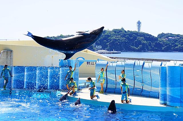 新江ノ島水族館 テレビのドラマ「流れ星」のロケ地_b0145398_14223419.jpg