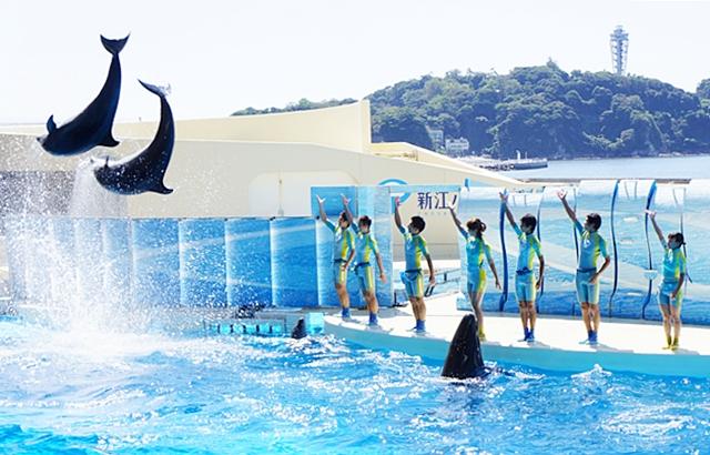 新江ノ島水族館 テレビのドラマ「流れ星」のロケ地_b0145398_1423437.jpg