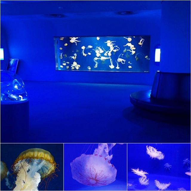 新江ノ島水族館 テレビのドラマ「流れ星」のロケ地_b0145398_14244016.jpg