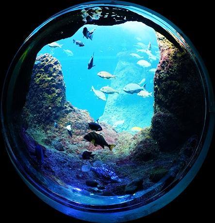 新江ノ島水族館 テレビのドラマ「流れ星」のロケ地_b0145398_14275722.jpg