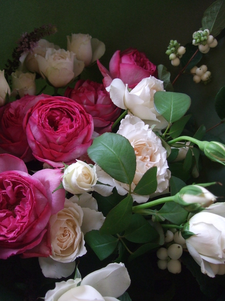 オークリーフ(ローズピンクのバラ)_f0049672_14282073.jpg