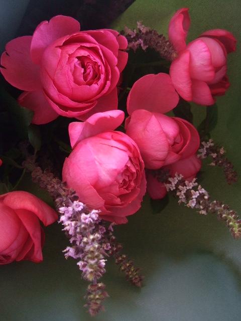 オークリーフ(ローズピンクのバラ)_f0049672_1443060.jpg