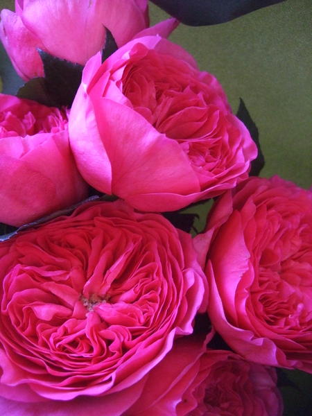 オークリーフ(ローズピンクのバラ)_f0049672_1492330.jpg