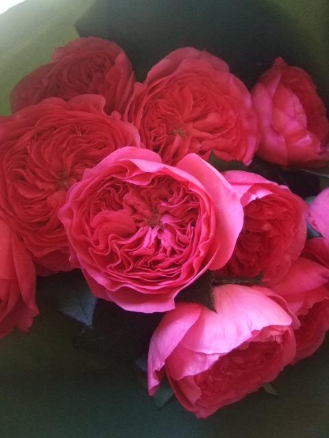 オークリーフ(ローズピンクのバラ)_f0049672_149277.jpg