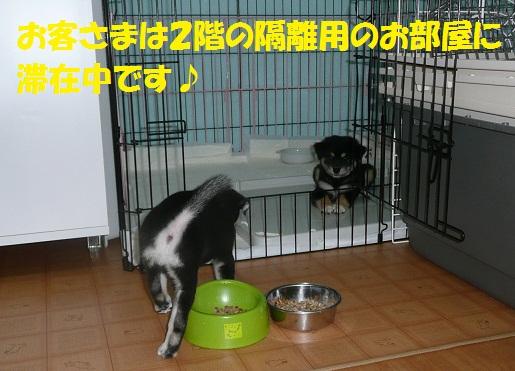 f0121712_21321278.jpg