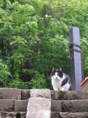 かたい猫、チーちゃん。 (+追記)_c0241324_14243947.jpg