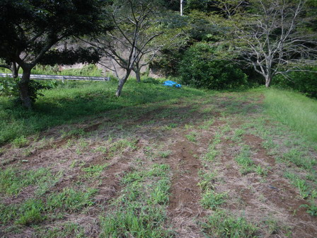 ナノハナ畑の準備_a0123836_1853637.jpg