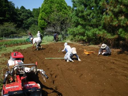 ナノハナ畑の準備_a0123836_1855547.jpg