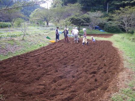 ナノハナ畑の準備_a0123836_1861589.jpg