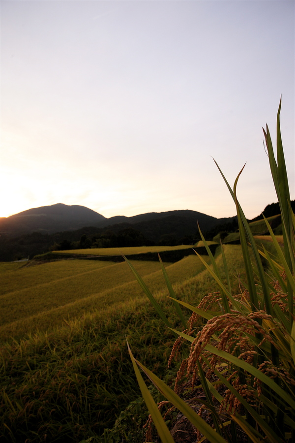 9月20日(木)午後5時半から午後6時半まで若木町川内で撮影させていただきました。_b0014152_23273819.jpg