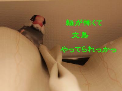 b0158061_20593380.jpg