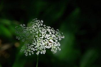 黒斑山で出会った花と果実_e0292469_16352059.jpg