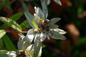 黒斑山で出会った花と果実_e0292469_16362438.jpg
