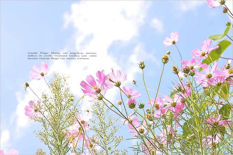 f0198771_23521129.jpg