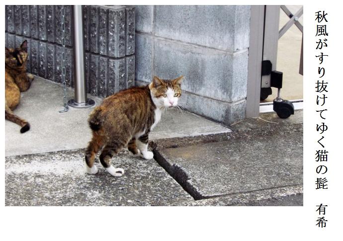 しっぽの短い猫_a0248481_20161646.jpg