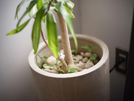 komoreの植物_f0202682_1938194.jpg