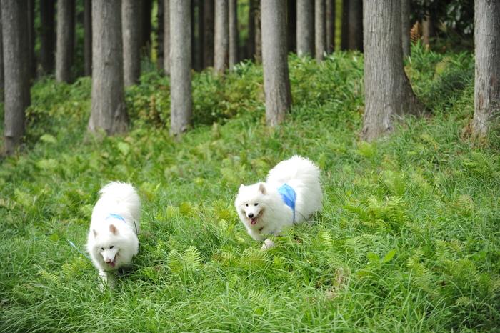 滋賀キャンプ part4_a0049296_201423100.jpg
