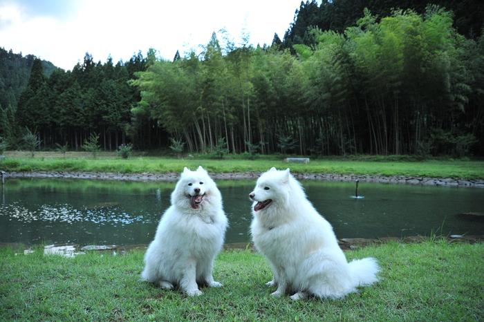 滋賀キャンプ part4_a0049296_20452291.jpg