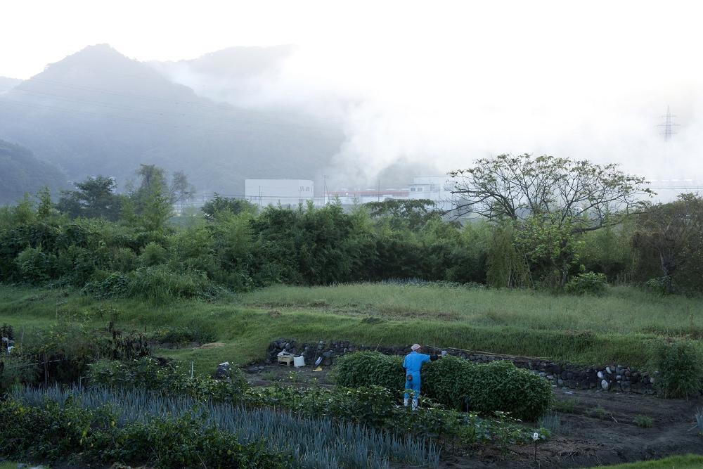 家庭菜園_b0074098_1710067.jpg