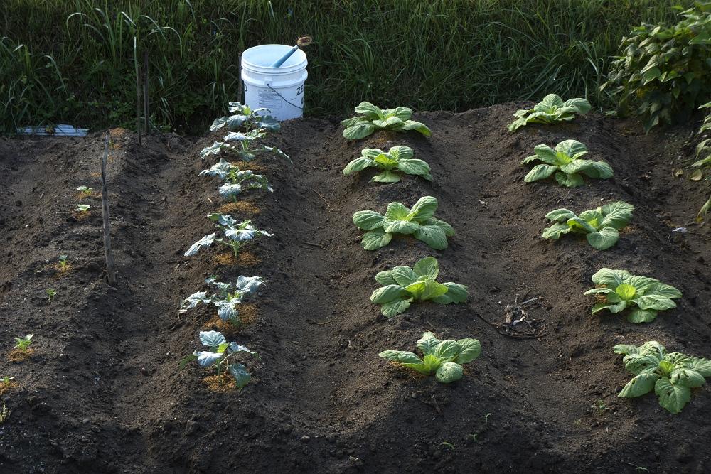 家庭菜園_b0074098_17122997.jpg