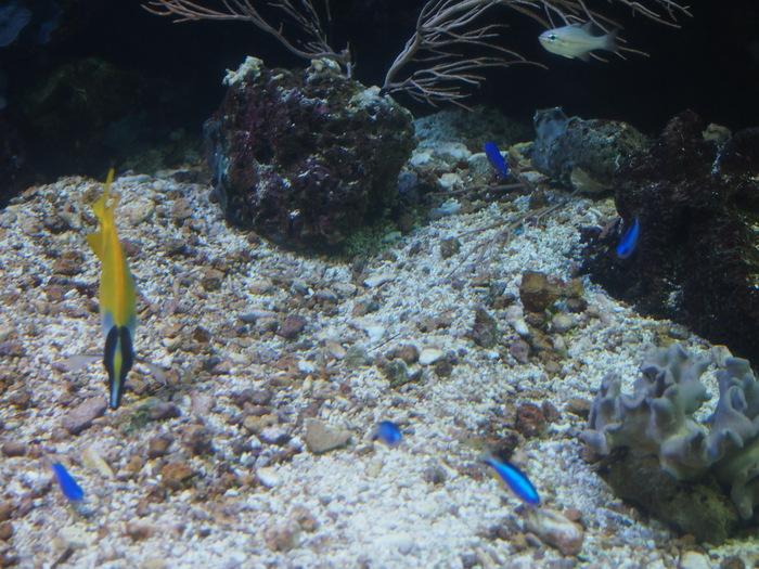 2012 6月 シンガポール 18  水族館に行ってみた_f0062122_1004660.jpg