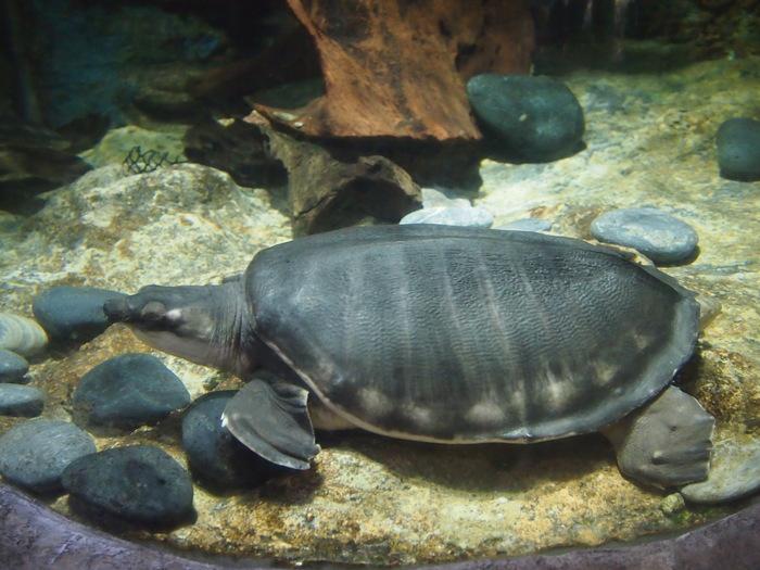 2012 6月 シンガポール 18  水族館に行ってみた_f0062122_9503129.jpg