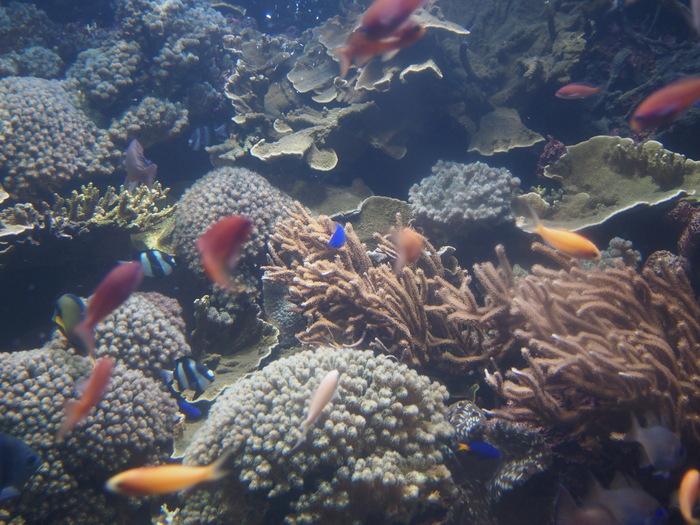 2012 6月 シンガポール 18  水族館に行ってみた_f0062122_951118.jpg