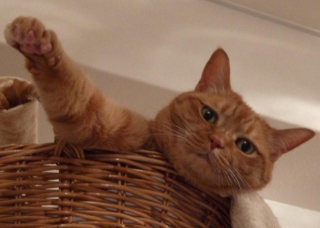 Yahoo!ペット「ただ今リラックス中」コンテストエントリー猫 空ぽーしぇるのぇるろった編。_a0143140_21101522.jpg