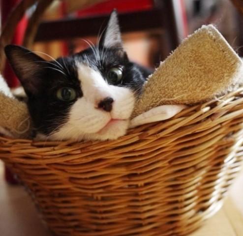Yahoo!ペット「ただ今リラックス中」コンテストエントリー猫 空ぽーしぇるのぇるろった編。_a0143140_218446.jpg